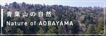 青葉山の自然 Nature of AOBAYAMA