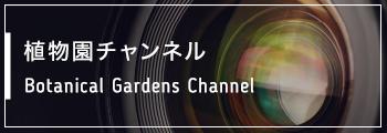 映像チャンネル Movie Channel