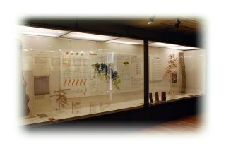 天然記念物青葉山の生態系