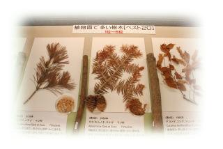 園内の自生植物目録とさく葉標本