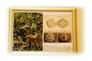花粉画と電子顕微鏡写真