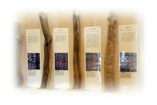 樹木標本と木材構造