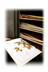 津田記念館に収蔵されるタイプ標本 (台紙に朱色でTYPEの文字が刻印されています.)
